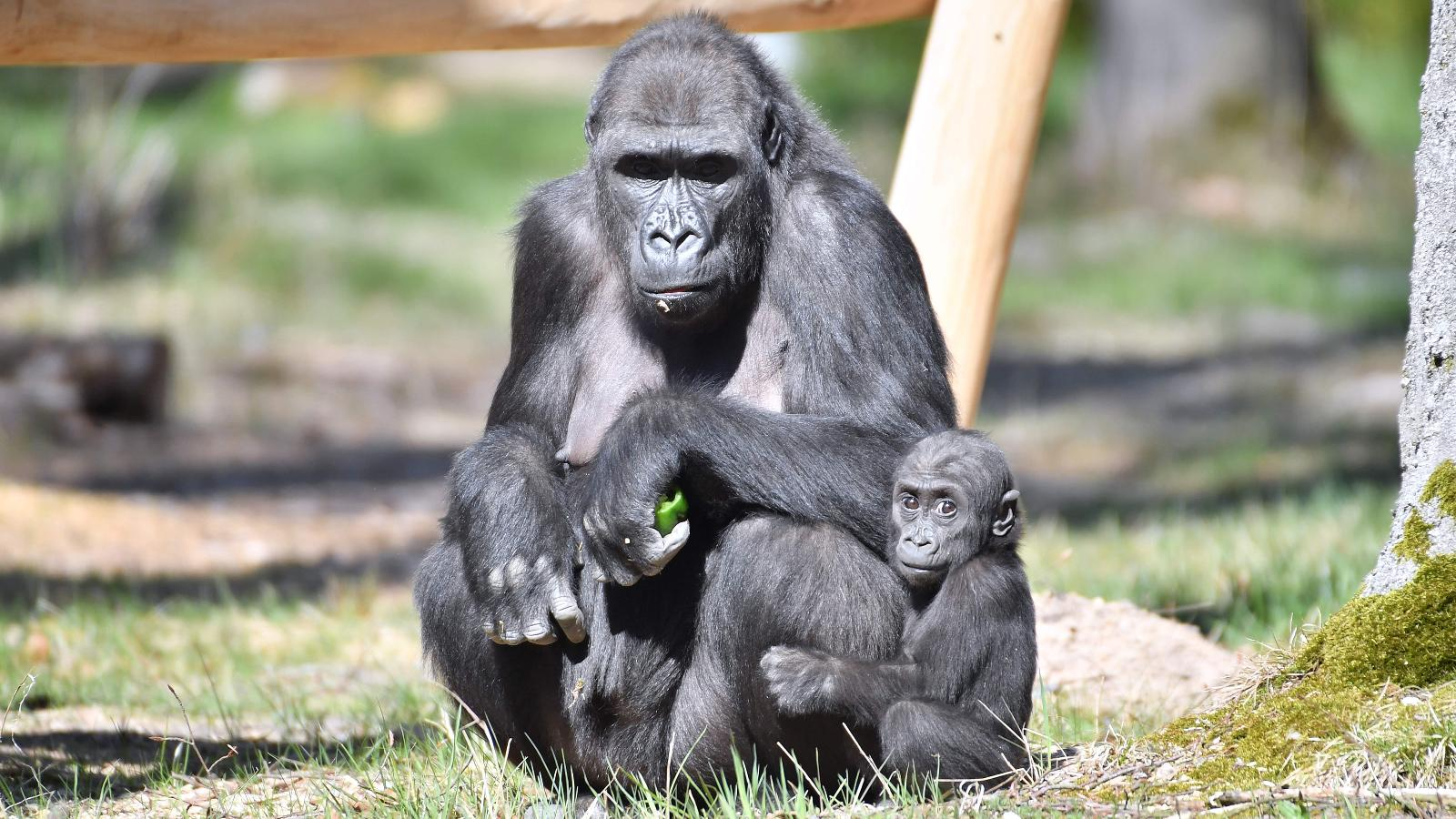 Moyo mit seiner Mutter Zola. Foto: Joachim Kloock