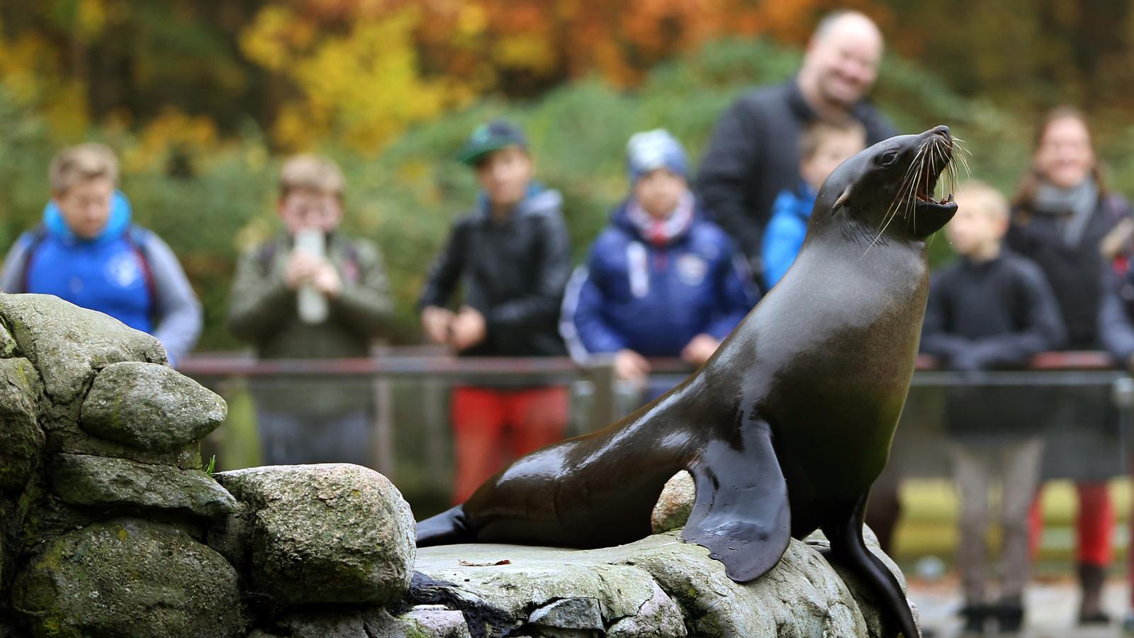 Zoo Rostock -