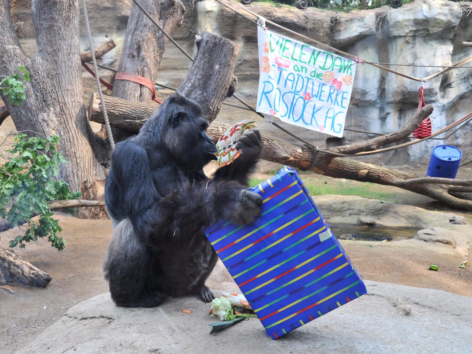 Assumbo freut sich über sein Geschenk